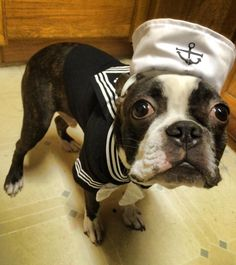 QUESTION ► What Kind of Bones and Treats are Good for a Boston Terrier? What kind of treats/bones do you give to your Boston Terriers? http://www.bterrier.com/?p=26680