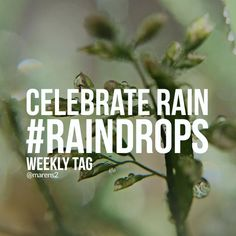 Celebrate Rain with the Weekly Tag
