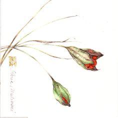 FIORDICOTONE. acquerello su carta, 12x12 cm circa, anno 2005