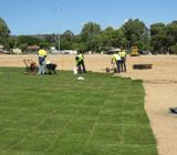 Know Which Part Of The Year Is Best To Lay The Turf. Lawn Turf, Green Lawn, Drought Tolerant, Golf Courses, Commercial