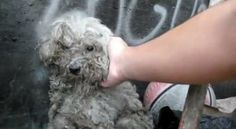 Blind Dog Living in a Trash Pile Gets the Most Beautiful Rescue – The End is Amazing
