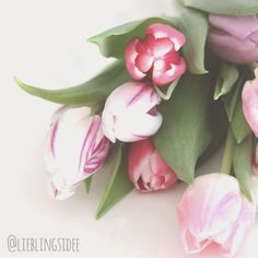 lieblingsidee: Tulpen, tulips, tulipaner
