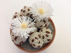 How to crochet a Lithops Crochet Cactus Free Pattern, Free Crochet, Crochet Patterns, Crochet Flowers, Fabric Flowers, Crochet Crafts, Crochet Projects, Cactus Craft, Felt Succulents