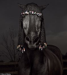Hairdressers are used to grooming wayward locks - but artist Julian Wolkenstein set a new standard when he used horses as models.I`M Rick James Farm Animals, Funny Animals, Cute Animals, Funny Horses, Horse Braiding, Horse Mane, Horse Grooming, Mane Attraction, Horse Pictures