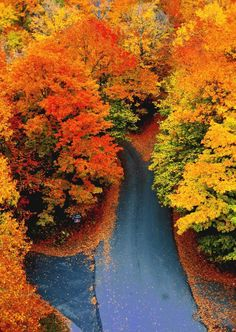 Fall Color Leaves Autumn Road from Above
