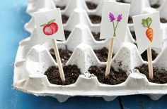 Egg Carton Seed Starters: Save money during gardening season! Cut off a cardboard carton's top, and fill each cup halfway with soil. Set a seed in each compartment, then top off with more soil. Place in a sunny window and water regularly.    Tip: Transplant grown seedlings to a larger pot or to your garden. Cut around the cups and place the biodegradable compartment directly in the soil.