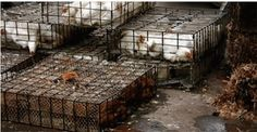USDA on Board With Shipping U.S. Chickens to China For Processing, Then Re-Entry to States for Human Consumption http://shar.es/1f0hUV via @sharethis...