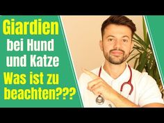 Giardien bei Hund und Katze - Was tun bei einer Giardiose??? - YouTube Beautiful Dogs, Pets, Baseball Cards, Youtube, Animales, Dog Owners, Vet Office, Happy Life, Cats