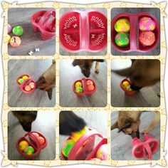 Homemade games to keep your dog busy Brain Games For Dogs, Dog Games, Dog Boredom, Dog Enrichment, Dumb Dogs, Dog Puzzles, Diy Dog Toys, Interactive Dog Toys, Animal Crafts