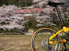 Copyright © キイロ三号 様 / Visc P20、2014年モデル? / 少し山に入ったところにある廃校となった小学校です。少し散り始めているので、二〜三日中には桜色の絨毯となりそうです。