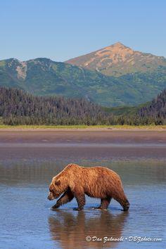 Brown Bear and Green Hills par Dan Zukowski on 500px