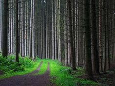 da woods :D