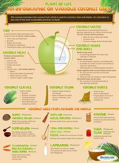 Costa Rica Green Living: COCONUT USES - INFOGRAPHIC