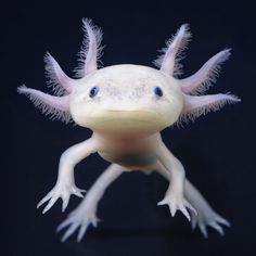 Hallucigenia: Axolotl, by Tim Flash