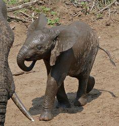 st lucia africa_336  #suidafrika #strande #omtereis   South Africa Places to Know  Adgang til vores blog finder meget mere information   #SouthAfrica #africadelsur South Africa, Elephant, Places, Blog, Animals, Animales, Animaux, Elephants, Blogging