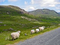 Healy Pass, Beara Peninsula, County Cork, Ireland. What you should keep in mind while down there: http://tourireland.com/blog/?article=73
