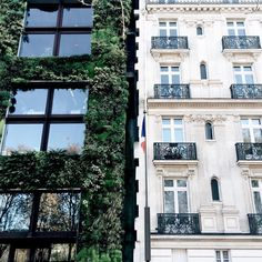 Beautiful buildings in Paris