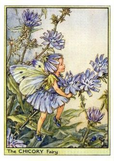 Chicory Flower Fairy, 1950 - Cicely Mary Barker