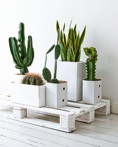 Cactus on pallet