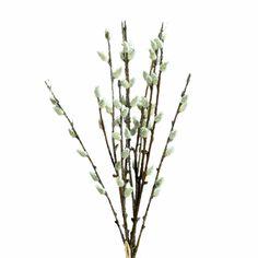 35495 Plant