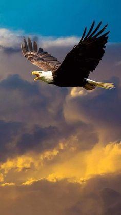 necesitan donde falta hago no me noDonde no me necesitan no hago falta is part of Eagle - Eagle Images, Eagle Pictures, Bird Pictures, Nature Pictures, Nature Animals, Animals And Pets, Cute Animals, Beautiful Birds, Animals Beautiful