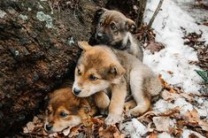 Three Homeless little frozen puppys with sad eyes, in the snow in forest near the old tree against background of winter. Waiting for warmth, good owner. New Year's Year Dog. Close up. - Buy this stock photo and explore similar images at Adobe Stock Homeless Dogs, Helping The Homeless, Animals And Pets, Baby Animals, Cute Animals, Sad Eyes, Dog Care, Animal Shelter, Cute Dogs
