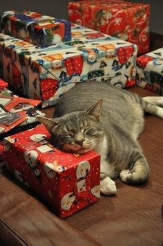 Cat with Christmas presents