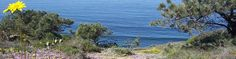 Torrey Pines Natural Reserve - outdoor activities, hiking, beaches, etc.