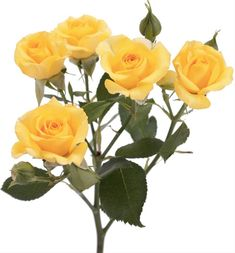 yellow spray roses - Google Search