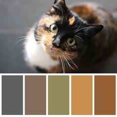 Colour Pallette, Colour Schemes, Color Combinations, Color Balance, Cat Colors, Design Seeds, Colour Board, Coordinating Colors, Color Swatches
