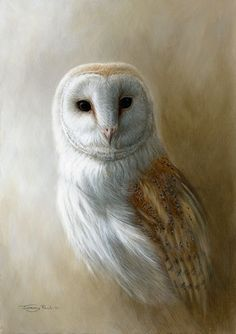 barn owl by Jeremy Paul Owl Art, Bird Art, Owl Pictures, Beautiful Owl, Wildlife Art, Wildlife Paintings, Animal Drawings, Owl Drawings, Nocturne
