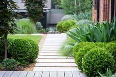 #peterfudge Back Gardens, Landscaping Ideas, Modern Landscaping, Backyard Landscaping, Formal Gardens, Outdoor Gardens, Rooftop Gardens, Garden Paths, Garden Beds