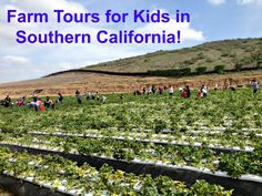 Farm Tours for kids in SoCal