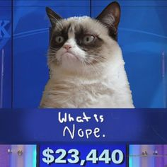 Grumpy Cat - Jeopardy Edition