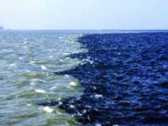 THE GULF OF ALASKA || gulf of alaska where two oceans meet underwater|| ...