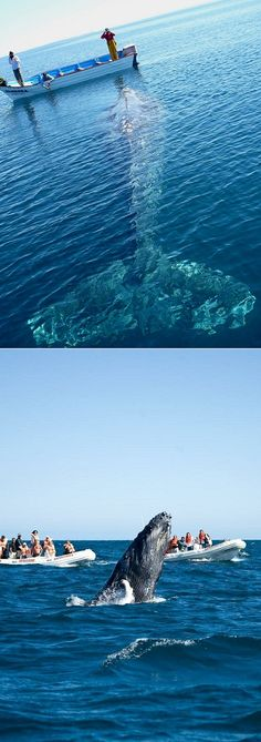Whale watching in Baja, Mexico - amazing! THIS WOULD TAKE MY BREATH AWAY. I WANT TO DO THIS MORE THAN ANYTHING.