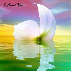 """Anne Vis Art Gallery """"Fresh"""" - floating flowers series"""