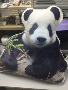 678b9ca2e1c A PANDA PILLOW! Hurry up to turn your pet into a wonderful huggable pillow  now