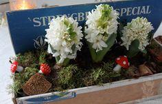 Voikukkapelto: Valkoiset kukat