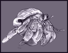 """A blue hermit crab is on the list of creatures to add to my body. An ode to """"Nation"""" by Terry Pratchett and a reminder to never accept a shell that is not of my own choosing."""