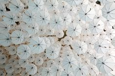 A canopy of umbrellas above the 2015 Habitare Design Fair in Finland by environmental artist Kaisa Berry and creative director Timo Berry of BOTH. White Umbrella, Umbrella Art, Under My Umbrella, Helsinki Design, Street Art, Aerial Acrobatics, Night Circus, Parasol, Imagines