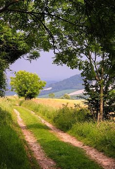 Chalk Stone Trail: Looking towards the South Downs Way over Cocking Down (England) by Hugh Chevallier cr.c.