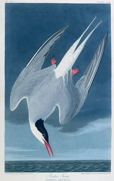 Images from our new British Library book: The Magic of Birds.