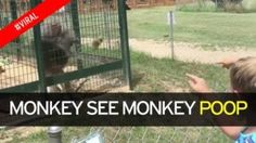 Angry Monkey Throws Poop In Little Girl's Face During Family Day Out To Zoo