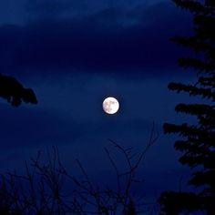 Moon 🌙 through the trees #moon #blue #bodobaumann #nightblue #moonshine