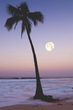 Periwinkle sky framing a palm tree at the ocean. Beautiful Moon, Beautiful World, Beautiful Places, Beautiful Pictures, Amazing Places, Tropical Paradise, Palm Trees, Mother Nature, Scenery