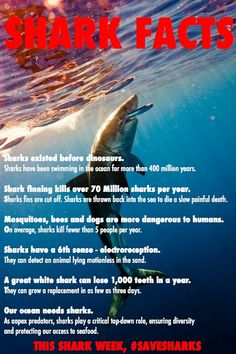 Image of: 10 Amazing Bryant Sloan Furniture Shark Facts You May Not Know Pinterest 10 Best Sea Animal Facts Images Fun Facts Amazing Facts