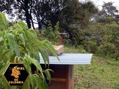 Si bien las variedades colombianas de plantas de café no necesitan insectos polinizadores para producir semillas y frutos, una investigación desarrollada por entomólogos de la UN demostró que, si las abejas silvestres hicieran dicha tarea, aumentaría la calidad de los granos. Esto podría impulsar nuevas estrategias para optimizar los cultivos.