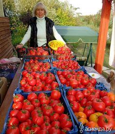 Агротехника выращивания томатов ОТ и ДО: Группа Практикум садовода и огородника