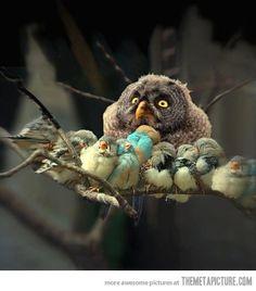 The Owl Has Flown Response